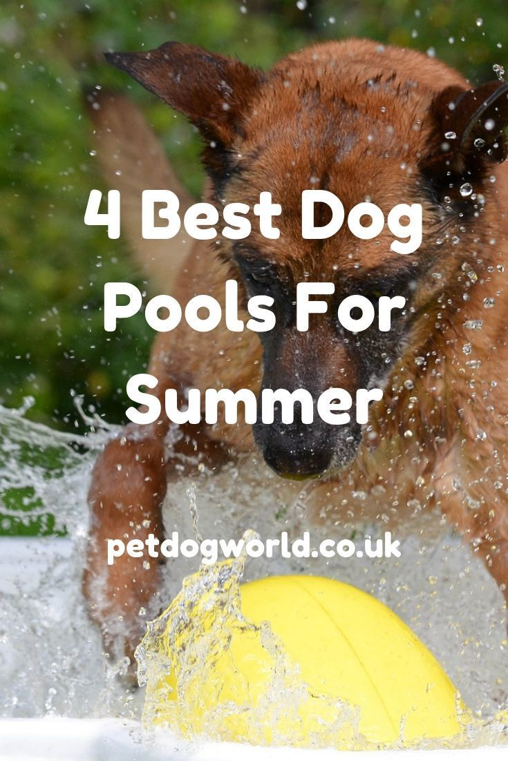 4 Best Dog Pools For Summer Dogs Of The World Best Dogs Pet Dogs