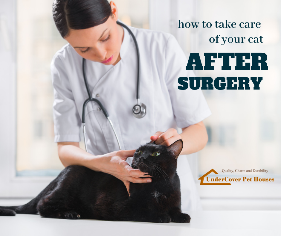 How to Take Care of Your Cat After Surgery Cat neutering