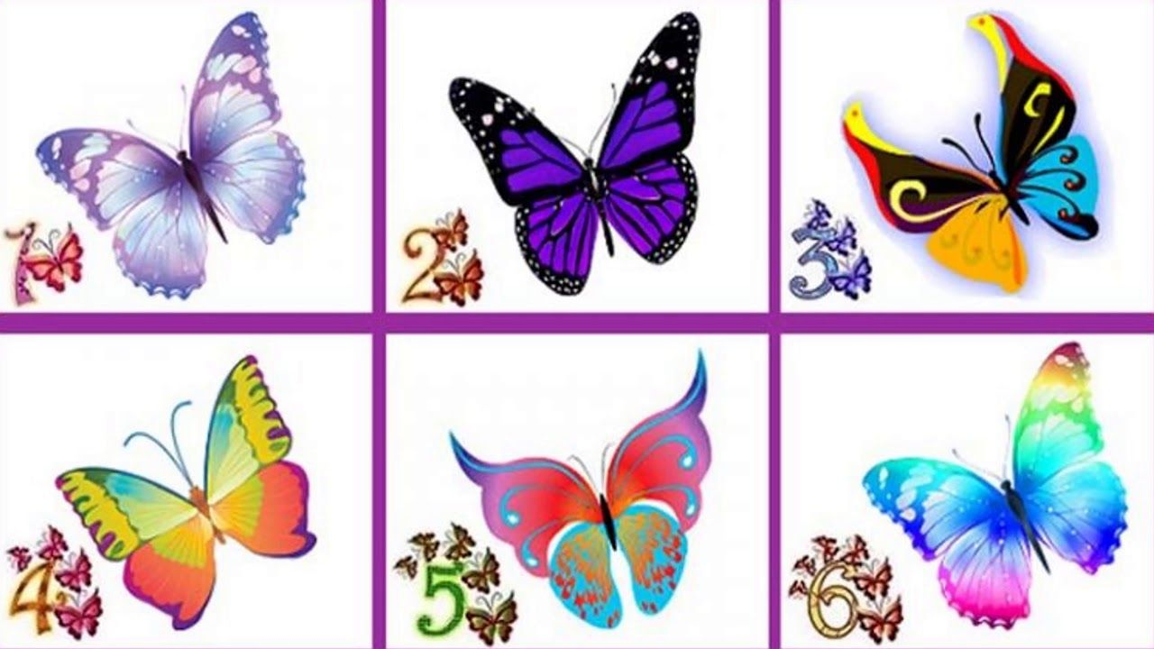 Choose Your Butterfly Reveal Something Great About Your