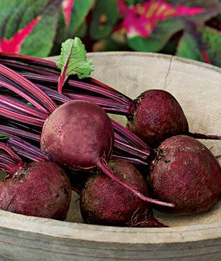 beets grow well in new england and here is a list of five other vegetables
