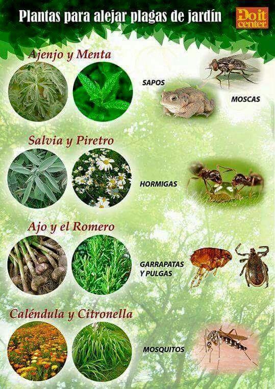 Para evitar mosquitos good to know garten bepflanzung - Plantas ahuyenta insectos ...