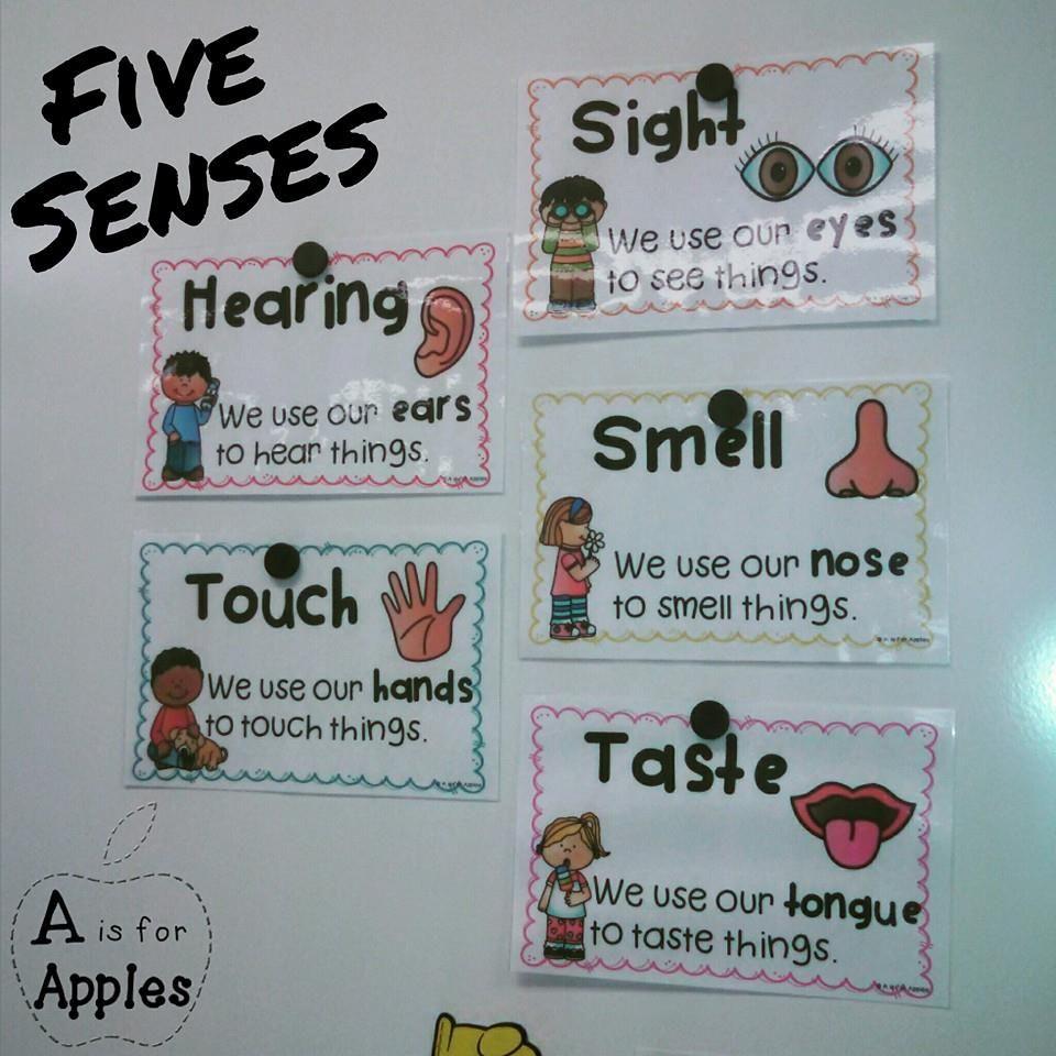 5 Senses Posters {FREEBIE} | pre-school | Pinterest | Kindergarten ...