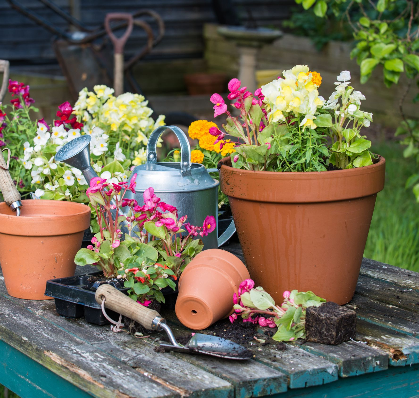 Learn How To Avoid Drowning The Plants In Your Container Garden