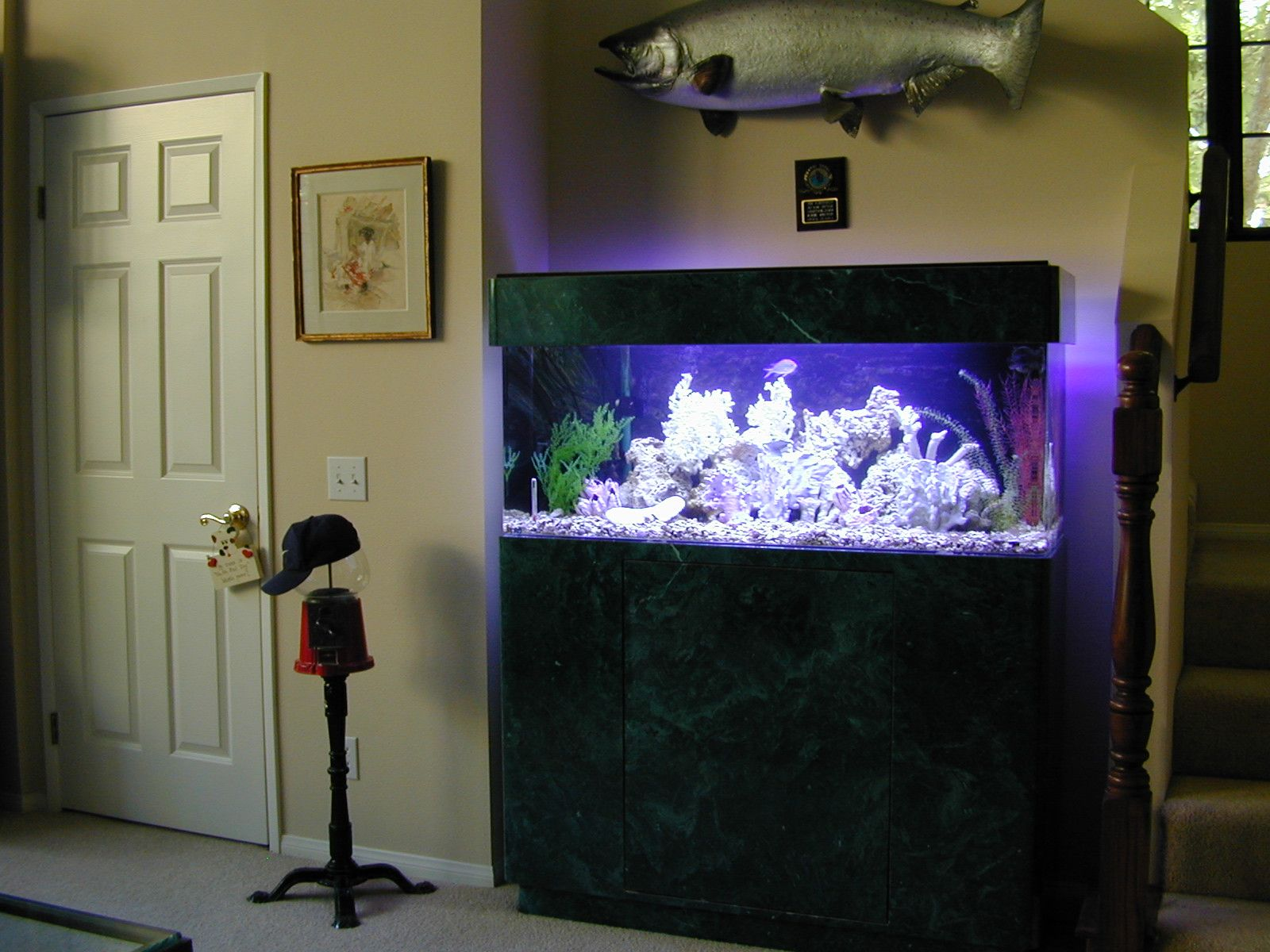 60 Gallon Marine Fish Tank, Aquarium Design, Marine Aquariums and .