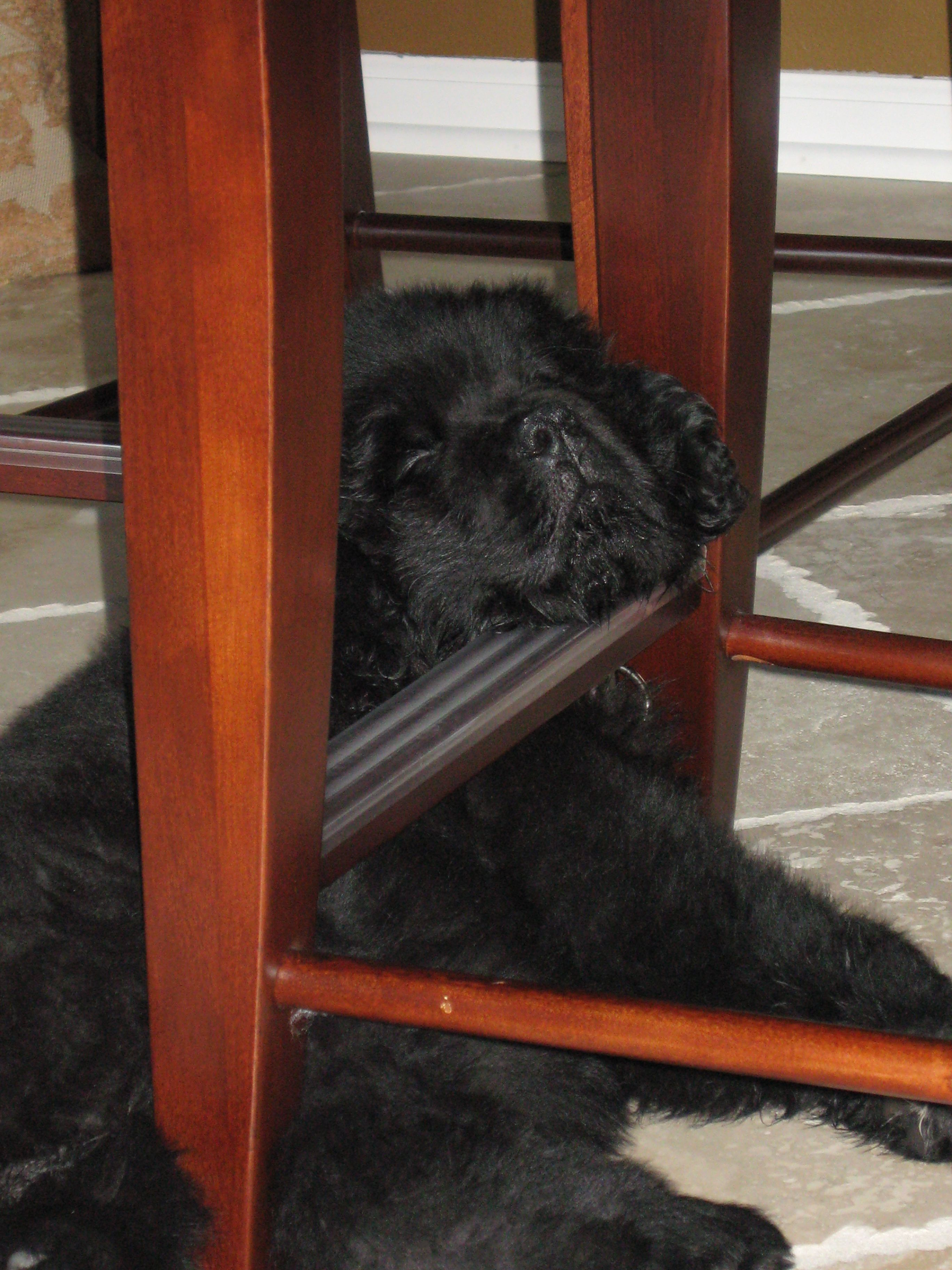 Puppy Newfie.....why do all newfie puppies sleep this way...all of mine did...:) RIP<3 you never leave my heart and soul.