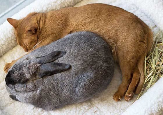 A Rescue Cat Who Never Met A Rabbit Prior To Moving To Her Forever Home Found An Everlasting Friendship With A Rabbit Animals Friendship Cats Animals Friends