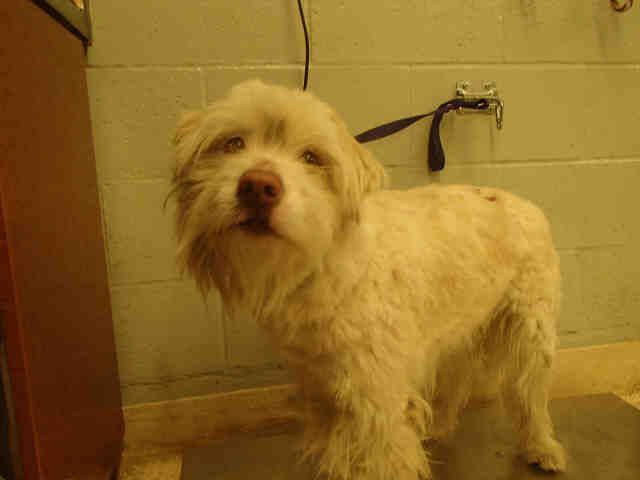 Meet Unknown An Adoptable Bearded Collie Looking For A Forever