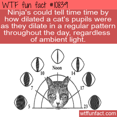 WTF Fun Fact Cat's Eye Watch in 2020 Wtf fun facts