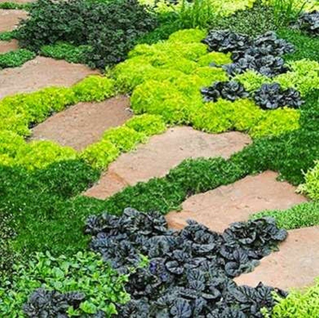 74 Cheap And Easy Simple Front Yard Landscaping Ideas (60 ...