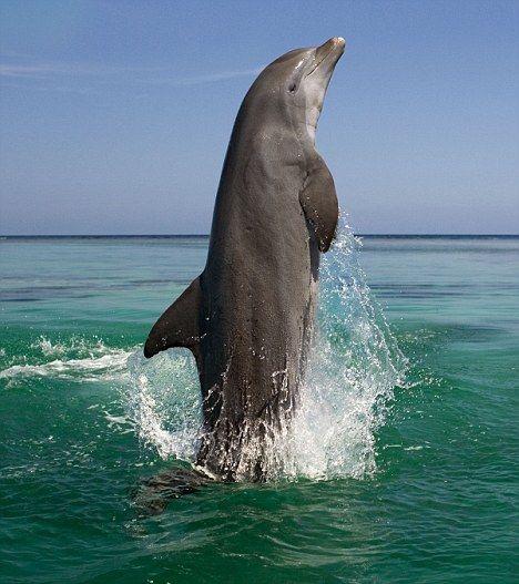 Strong Creature Fuerte Criatura Delfines Fauna Marina Animales