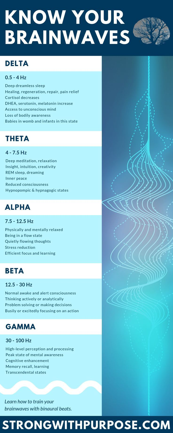 The Science of Brainwaves  Binaural Beats  Strong with Purpose  Spirituality Healing Intuitive Infographic about delta theta alpha beta and gamma brainwaves Learn more ab...