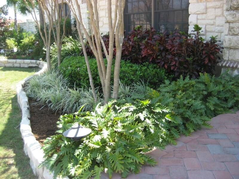 best 25 southern landscaping ideas on pinterest sun On southern landscape plants