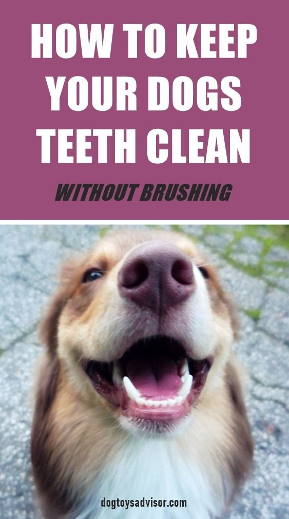 Not every dog lets your brush his teeth. Here's how you