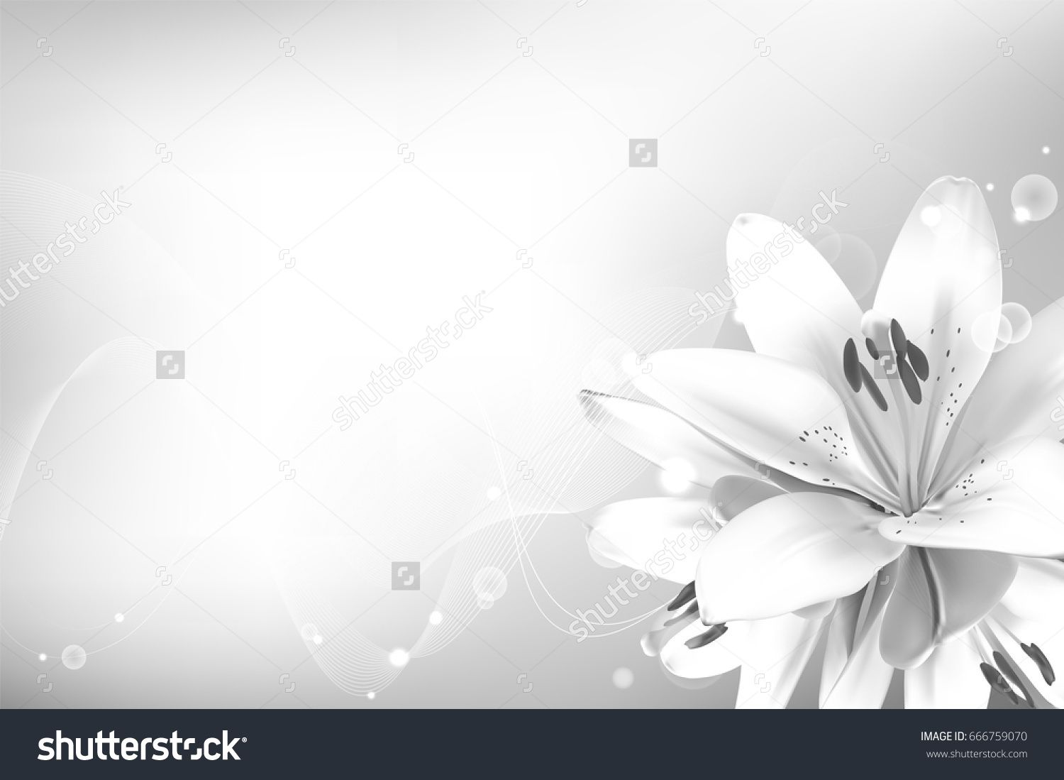 Realistic vector flowers background bouquet of white lilies