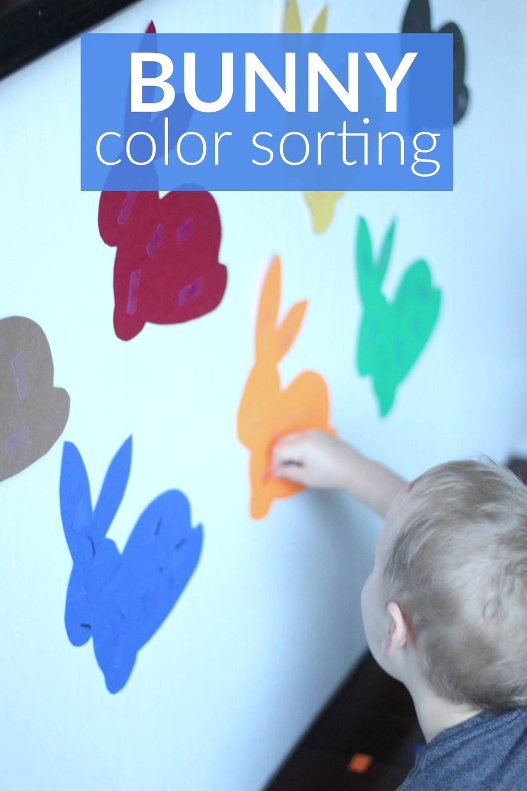Bunny Color Sorting