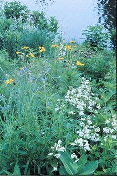 8e0c7da9f18fe5a5912e9950d79db497 Native Wildflower Garden Designs on wild garden design, herb garden design, cactus garden design, organic garden design, sand design, gravel design, small garden design,