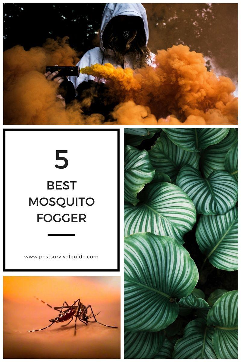5 Best Mosquito Fogger Mosquito fogger, Mosquito fogging