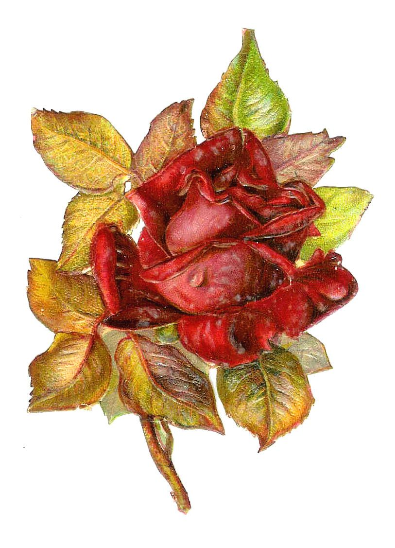 Antique Free Flower Clip Art Red Rose with Leaves Victorian