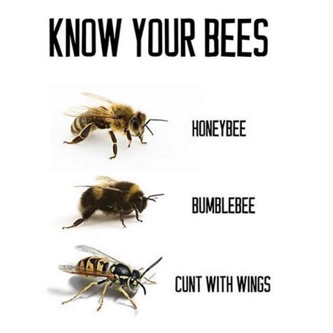 Citaten Over Bijen : Bijen hommels wespen instagram pinterest funny