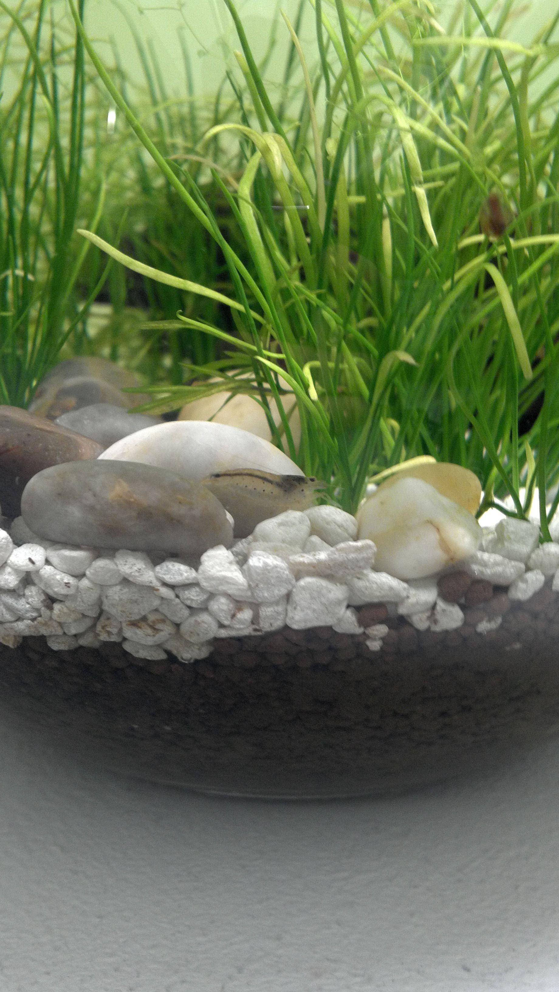 8e0dcc2532fd626bc7025da2a36ab5ab Frais De Aquarium Tropical Schème