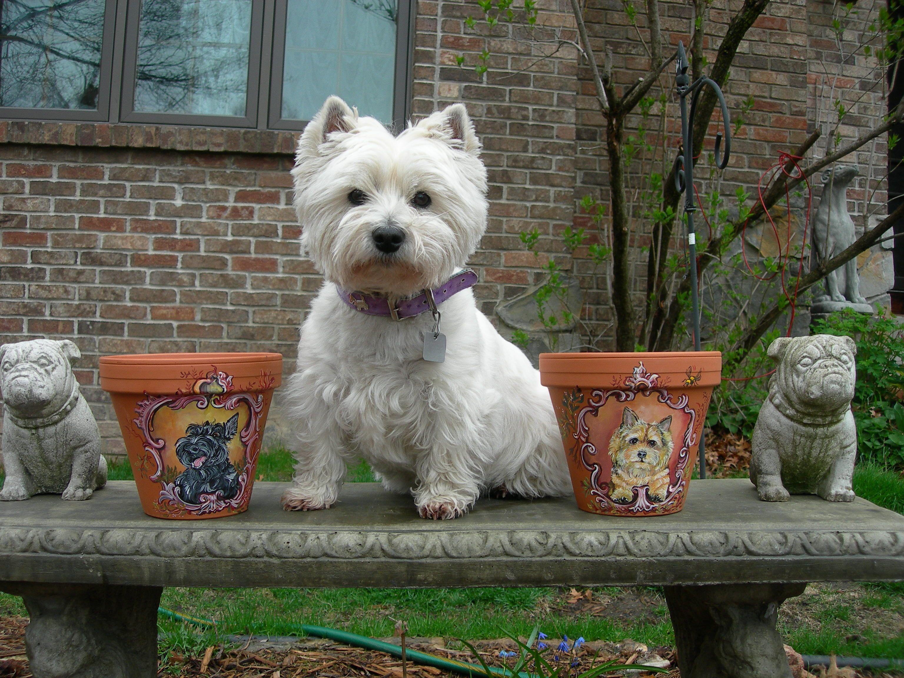 Paint Me Next White Dog Images Westie Terrier Dog Images