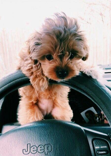 cute Puppy Dog animal pets Perros bonitos