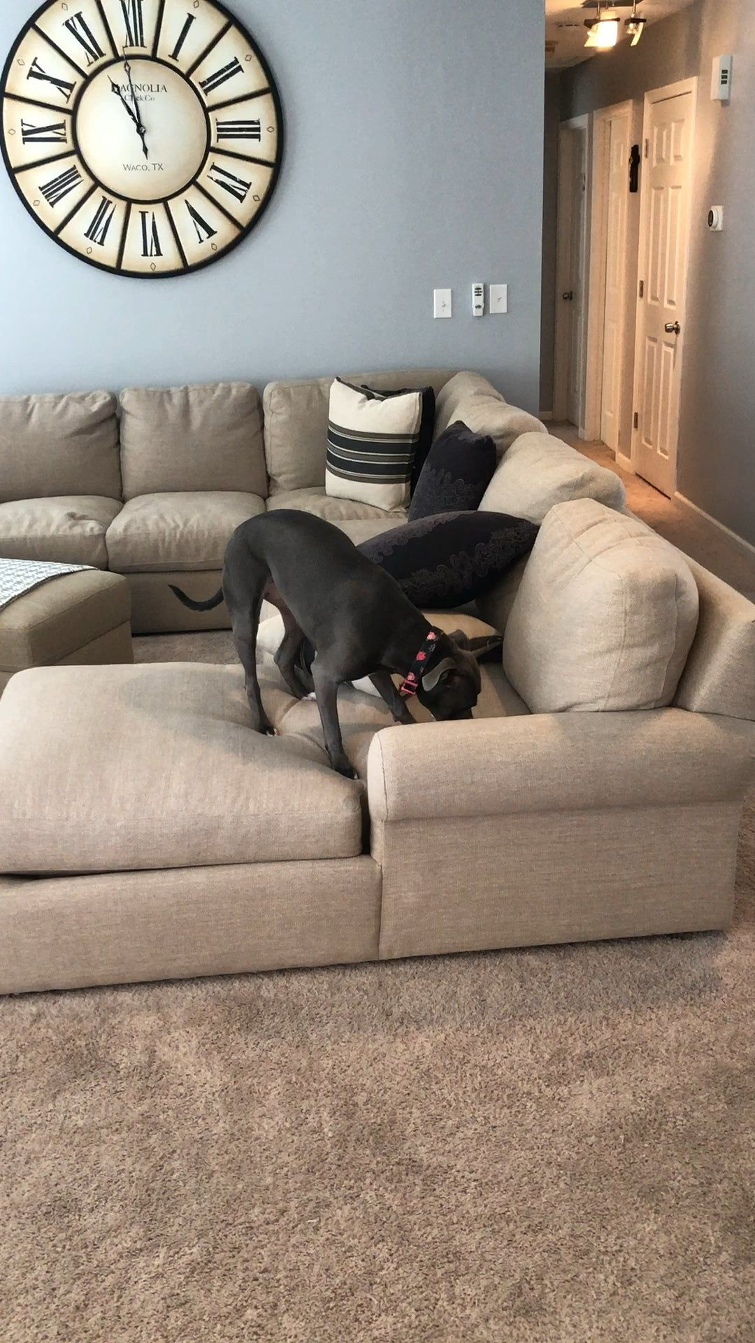 Dog Buried Bone In Couch With Imaginary Dirt Funny Gifs