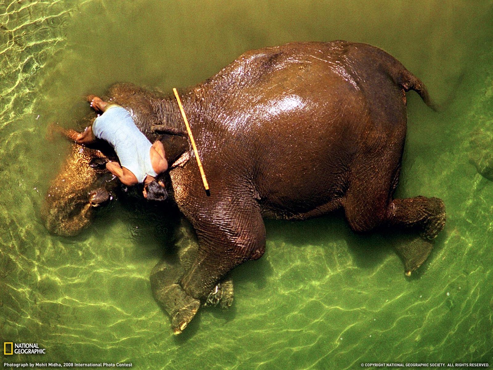 Appu In His Bath Tub Beautiful India Elephant Bath