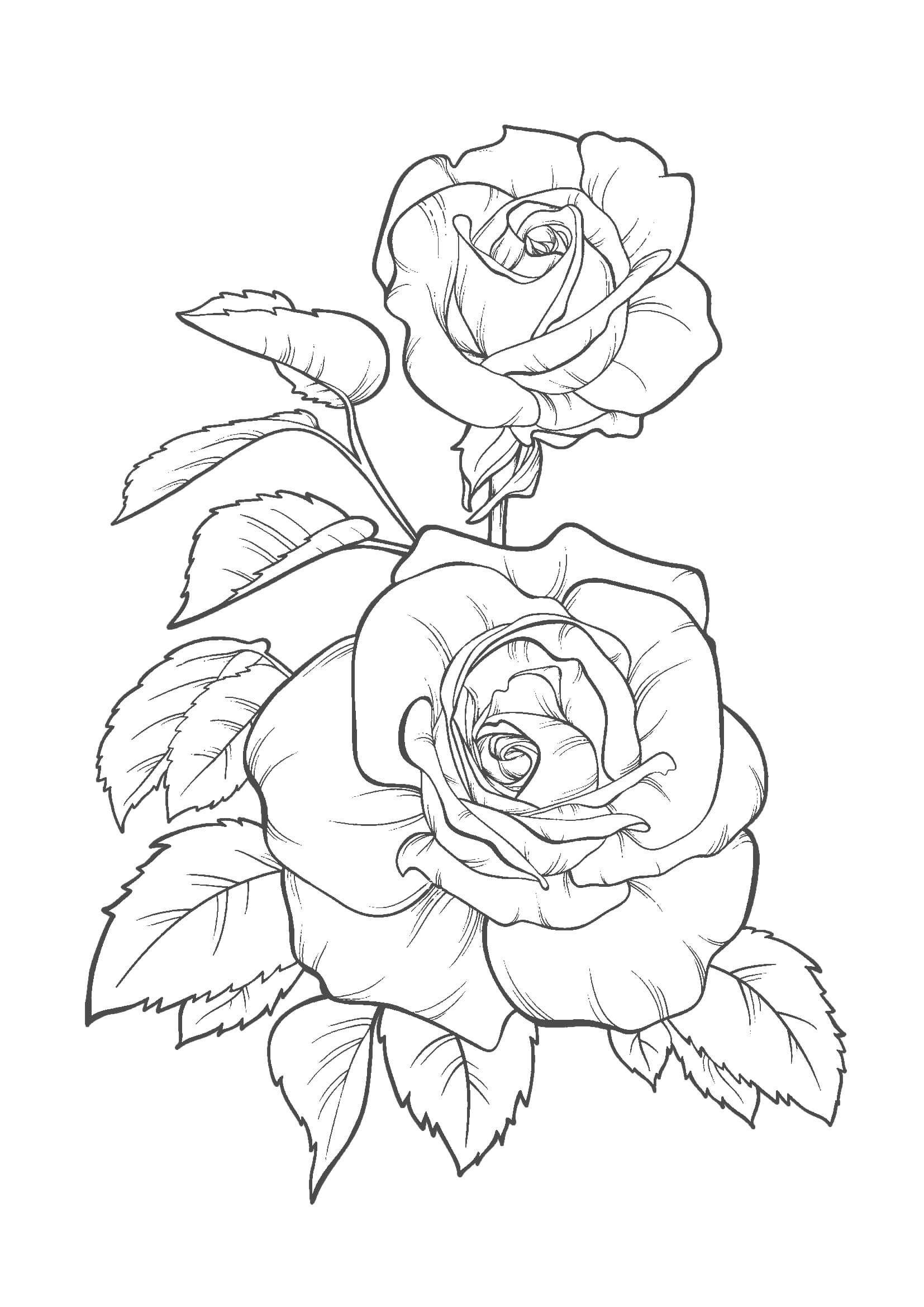 花01 A4無料印刷の大人のぬりえ バラ 描き方 花のドローイング 薔薇イラスト