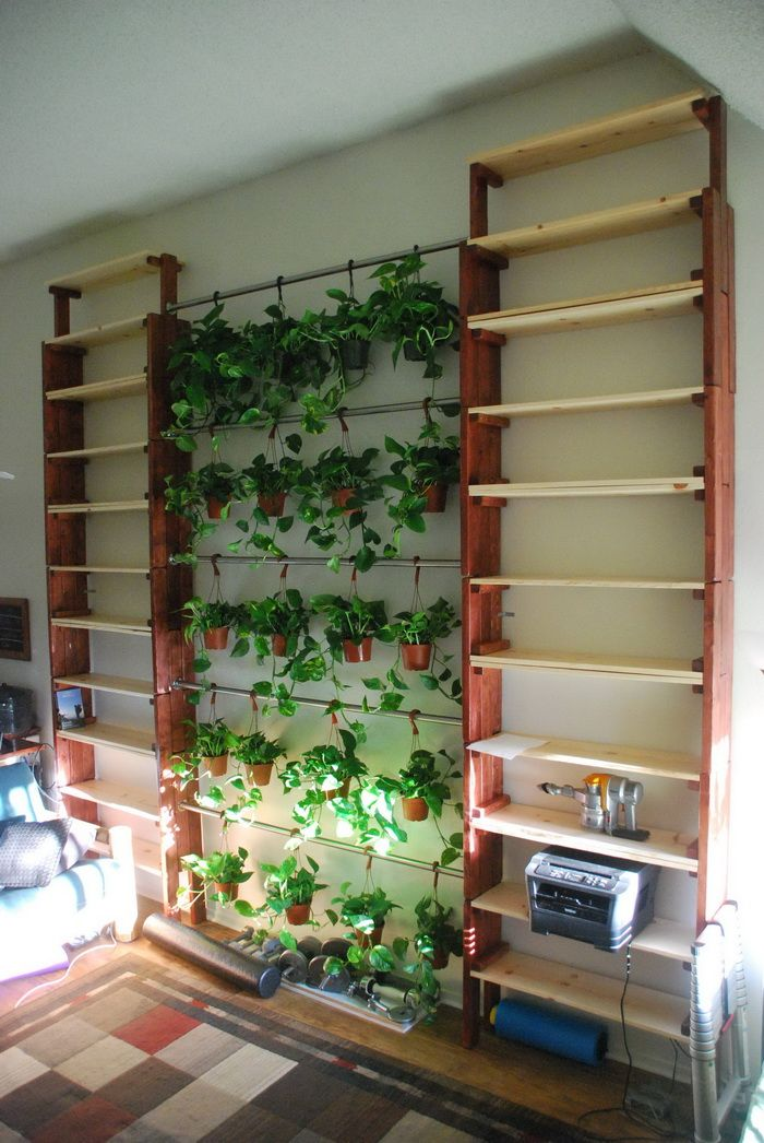 Plant Bookshelf In Front Of Window