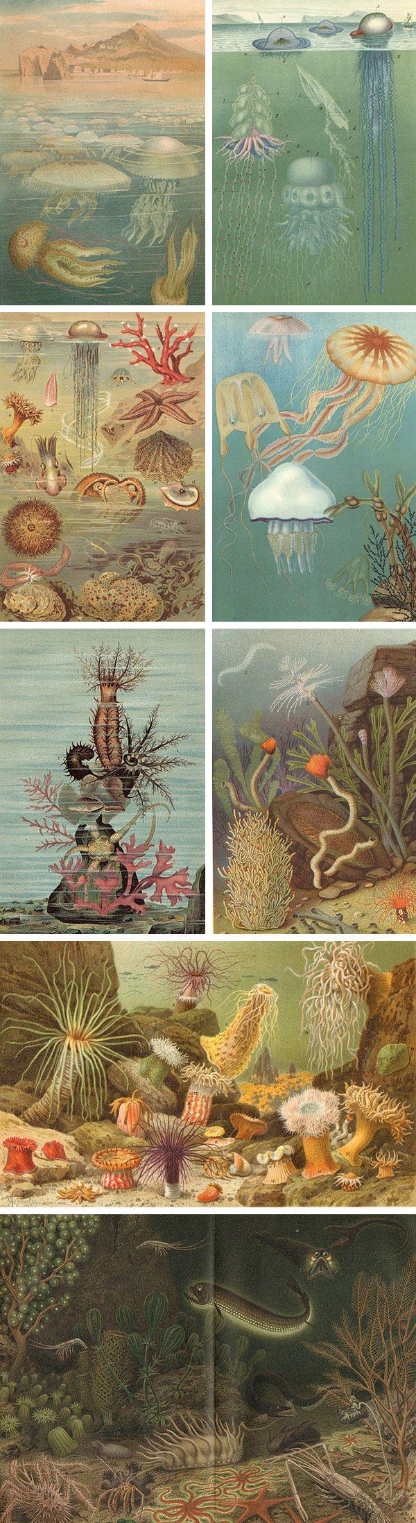 Vintage vida acuatica.