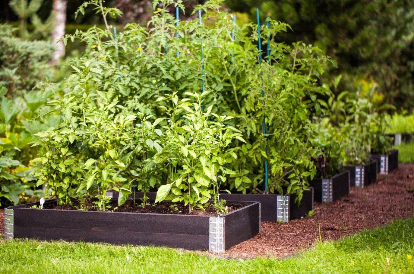 Hochbeet Schwarz Kit Max In 2020 Hochbeet Pflanzen Gartendesign Ideen