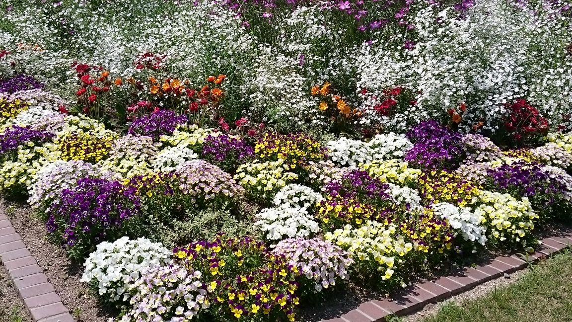 The flower in Kyoto Botanical Gardens.