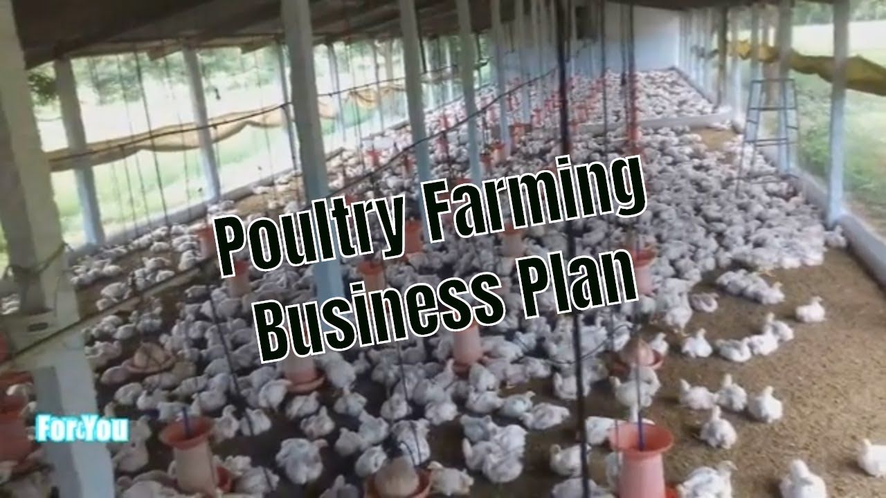 poultry farming business plan Poultry farm, Farming