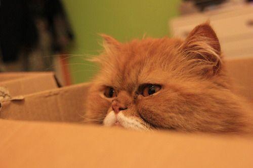 Oki the Cat