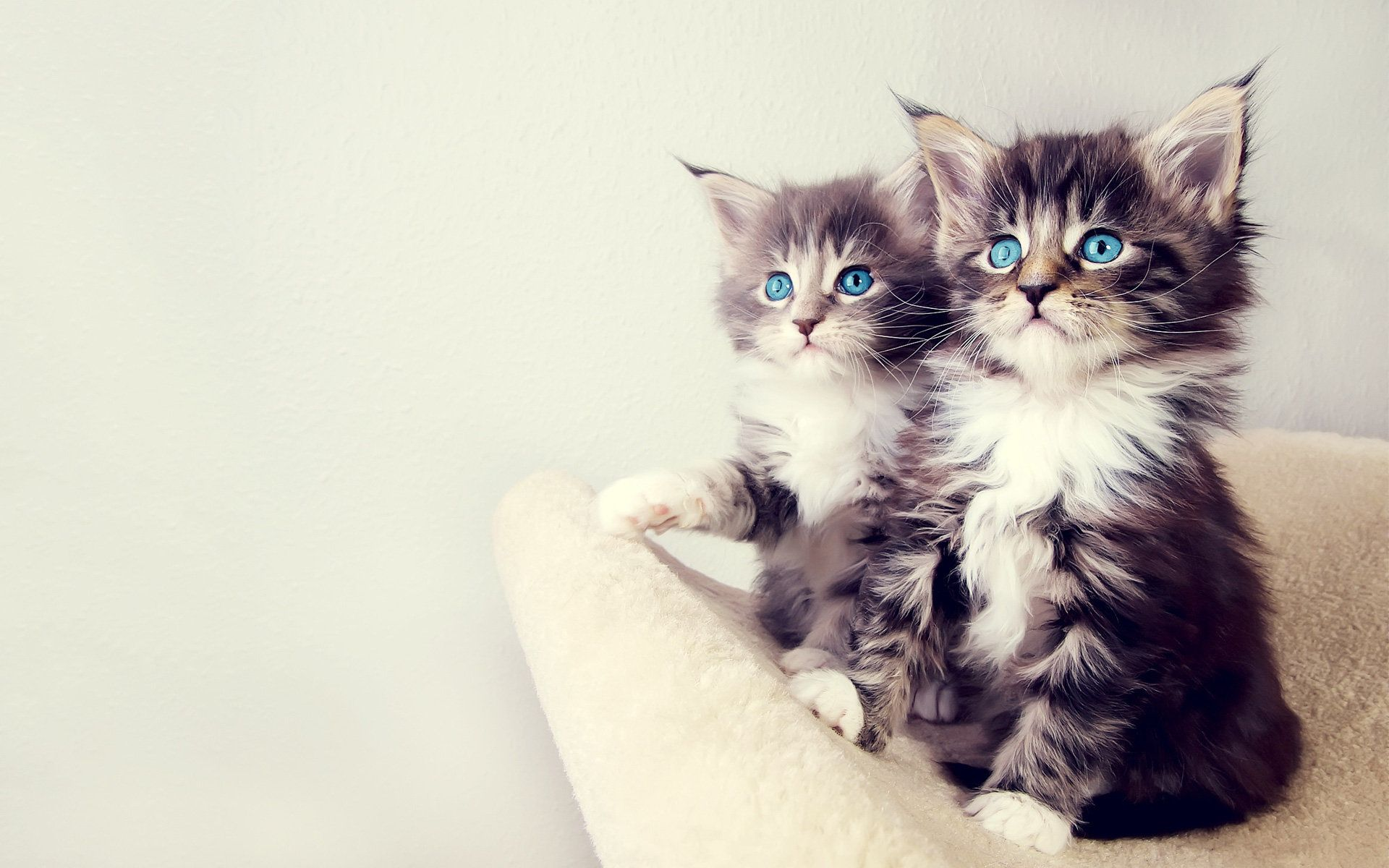 Baby Animals (With images) Kittens cutest, Beautiful