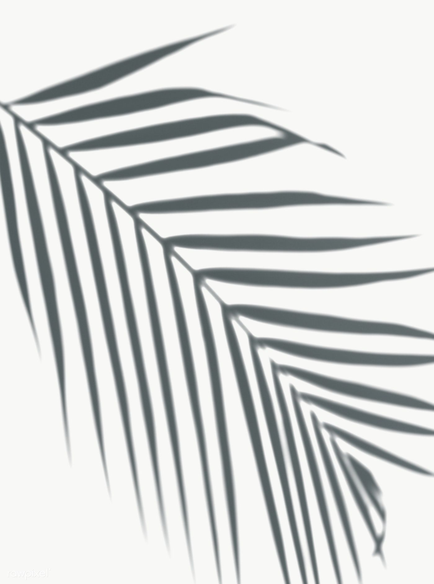 Shadow Of Palm Leaves On A White Wall Free Image By Rawpixel Com Shadow Water Color World Map Palm Leaves