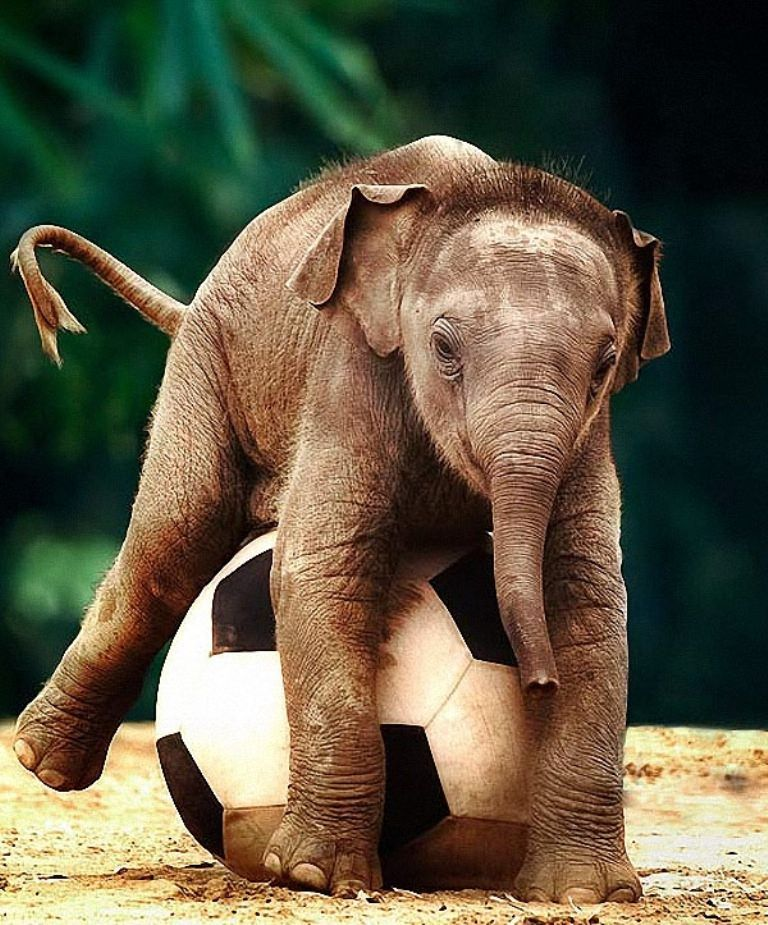 Красивые ночь, картинка прикол слоник