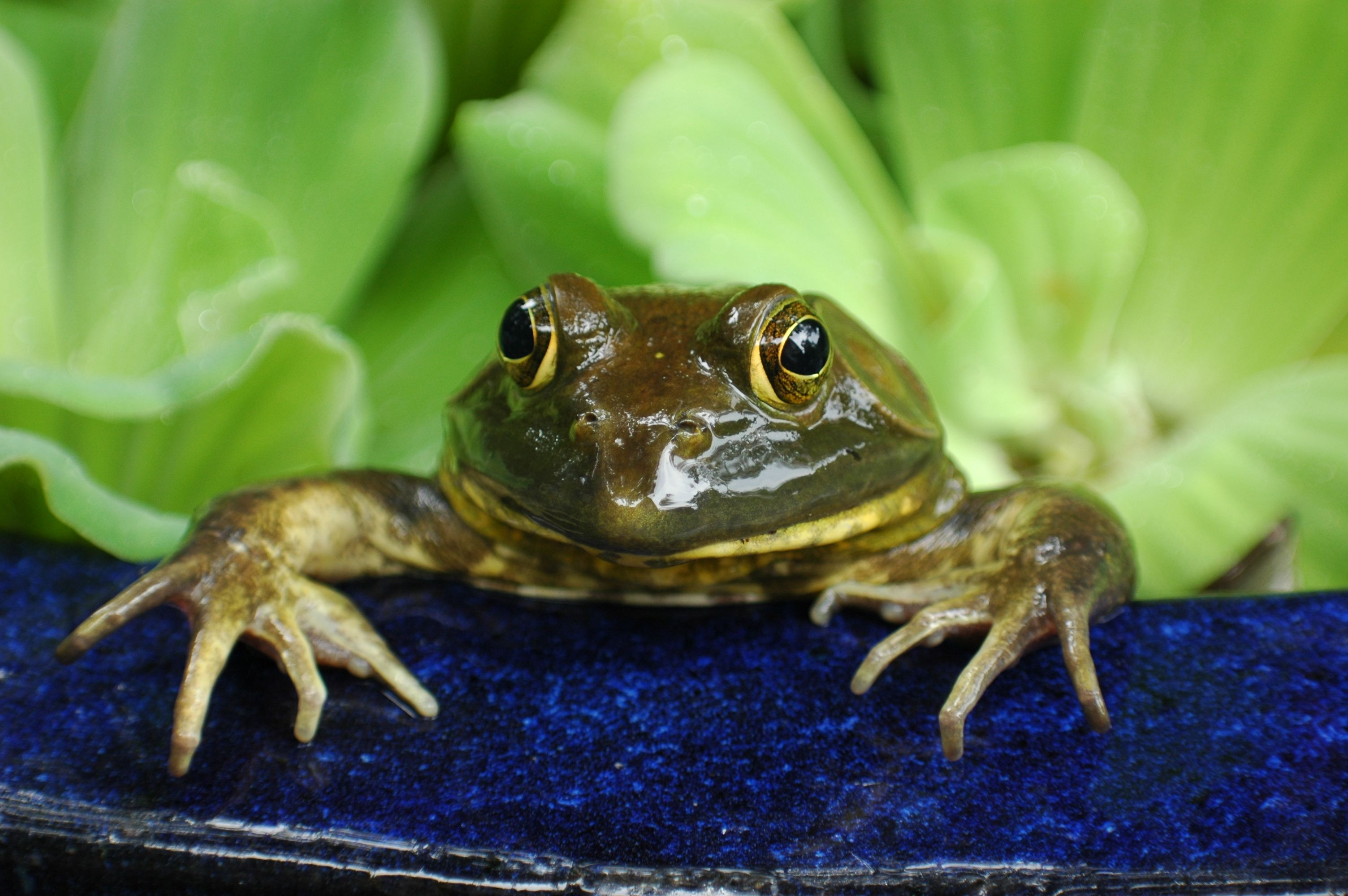 Fun And Fascinating Frog Facts