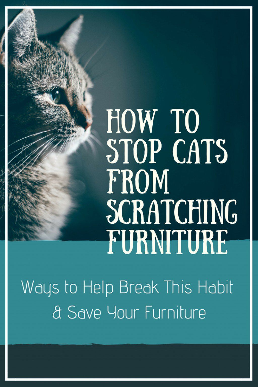 How To Stop Cats From Scratching Furniture Furniture Scratches Cat Scratching Furniture Cat Proof Furniture