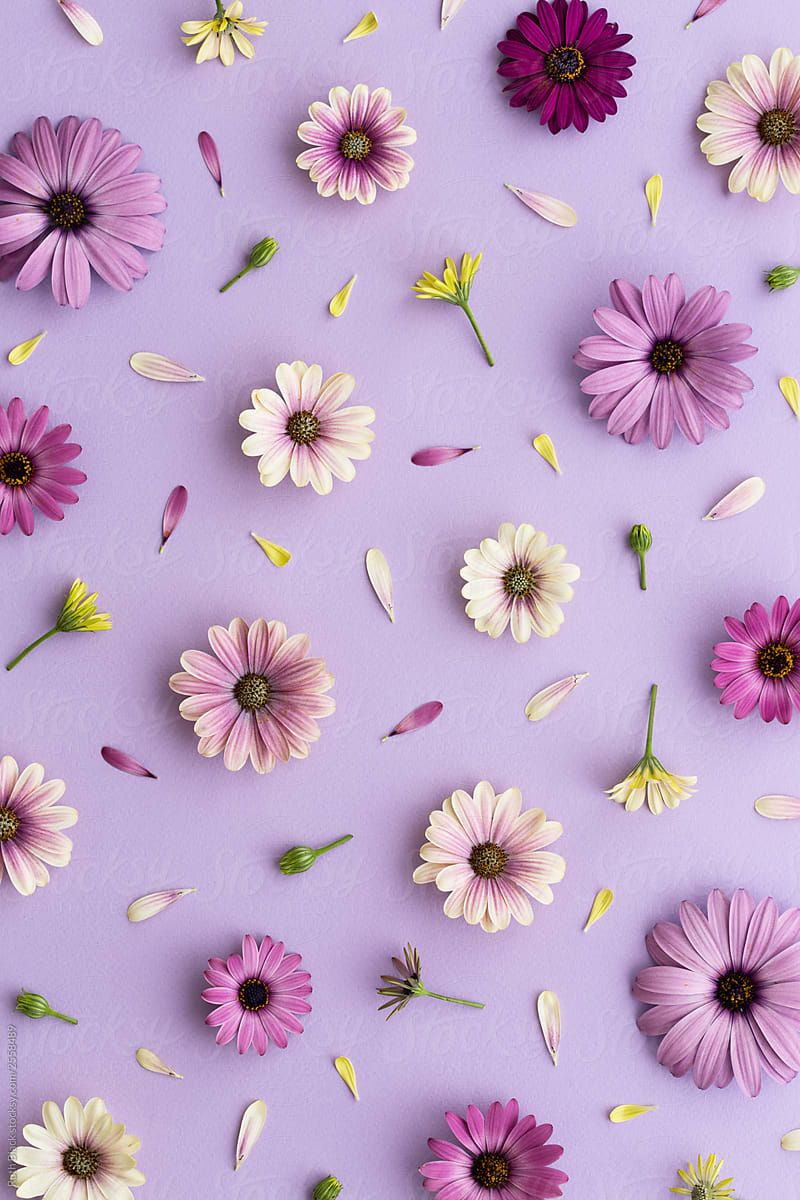 Purple Flowers Arranged On A Purple Background Flower Background Iphone Floral Wallpaper Iphone Flower Background Wallpaper