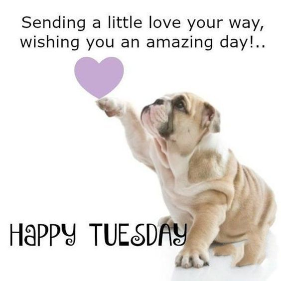 Top 20 Tuesday Memes Positive Tuesday Quotes Good Morning Happy Tuesday Quotes Tuesday Humor