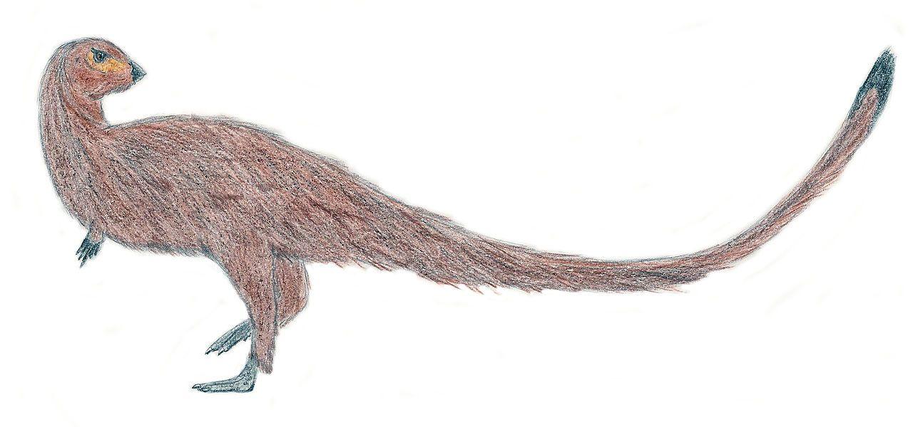 "1280px-Leaellynasaura_EF"""".jpg (1280×600) - L. amicagraphica. Dinosauria, Ornithischia, Cerapoda, Ornithopoda, Hypsilophodontidae. Auteur : El fosilmaníaco, 2011."