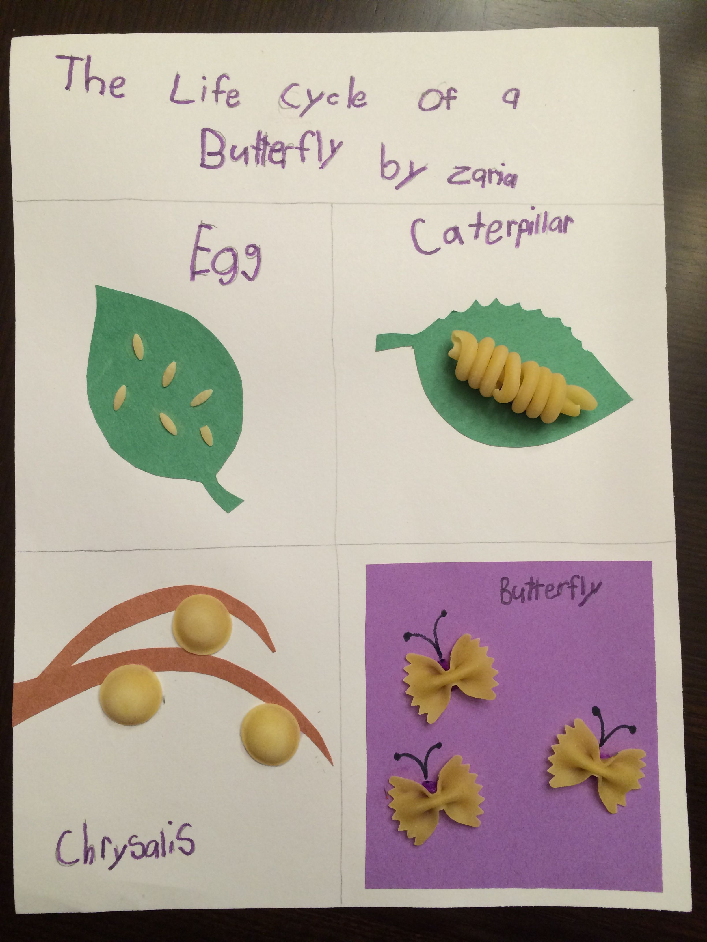 Life Cycle Of A Butterfly 2nd Grade Project