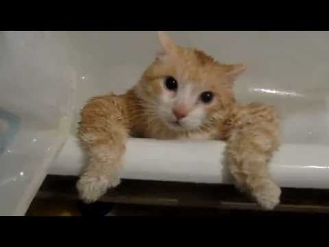 Image result for cat in bathtub