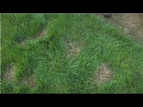 Lawn care how to take care of a bald spot in your lawn youtube lawn care how to take care of a bald spot in your lawn youtube publicscrutiny Image collections