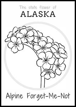 Free Alaska State Flower Coloring Page
