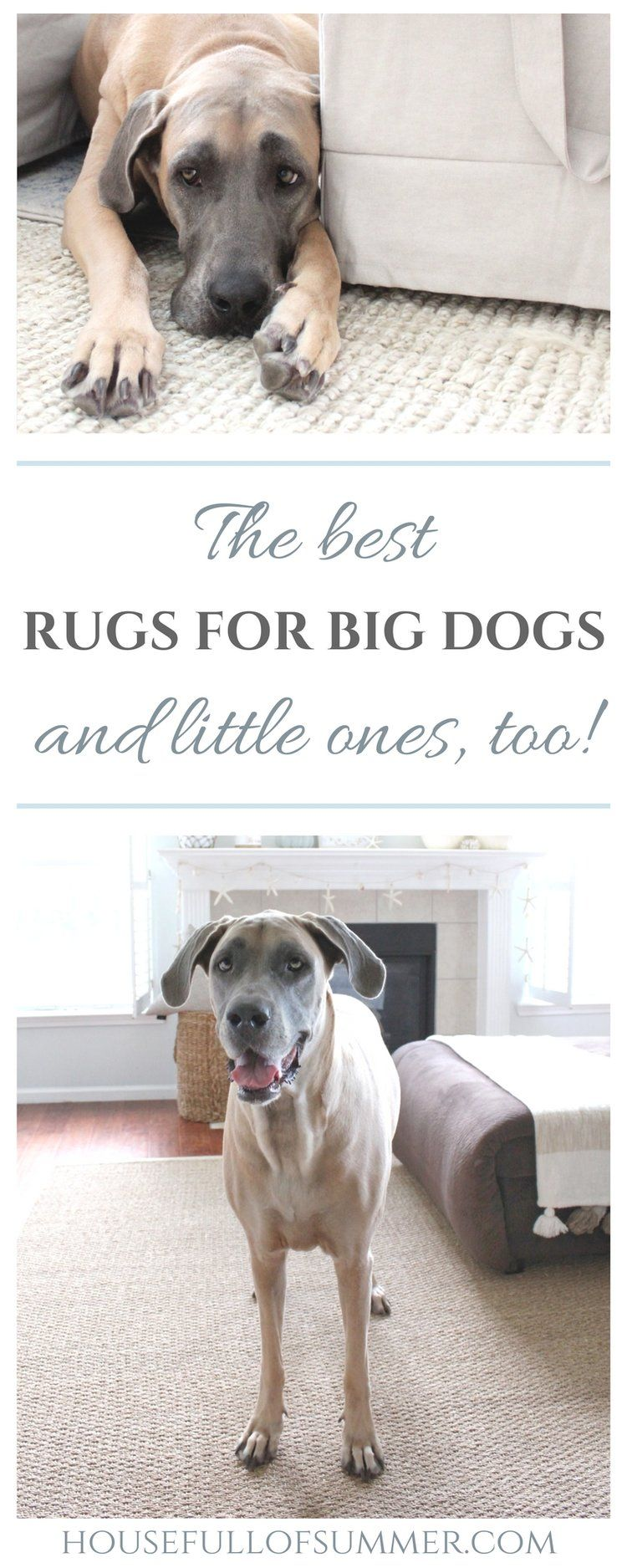 The Best Rugs For Dogs And Little