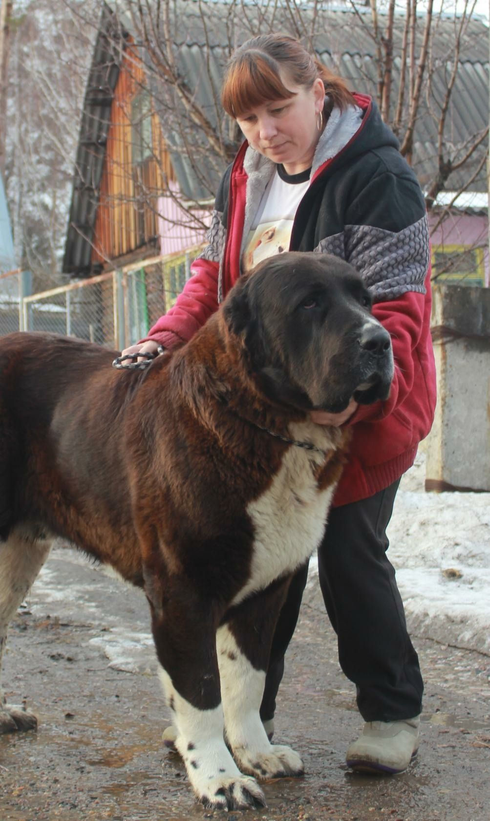 Pin By Sophia Politino On Favourite Dogs Kangal Dog Dogs Giant Dogs