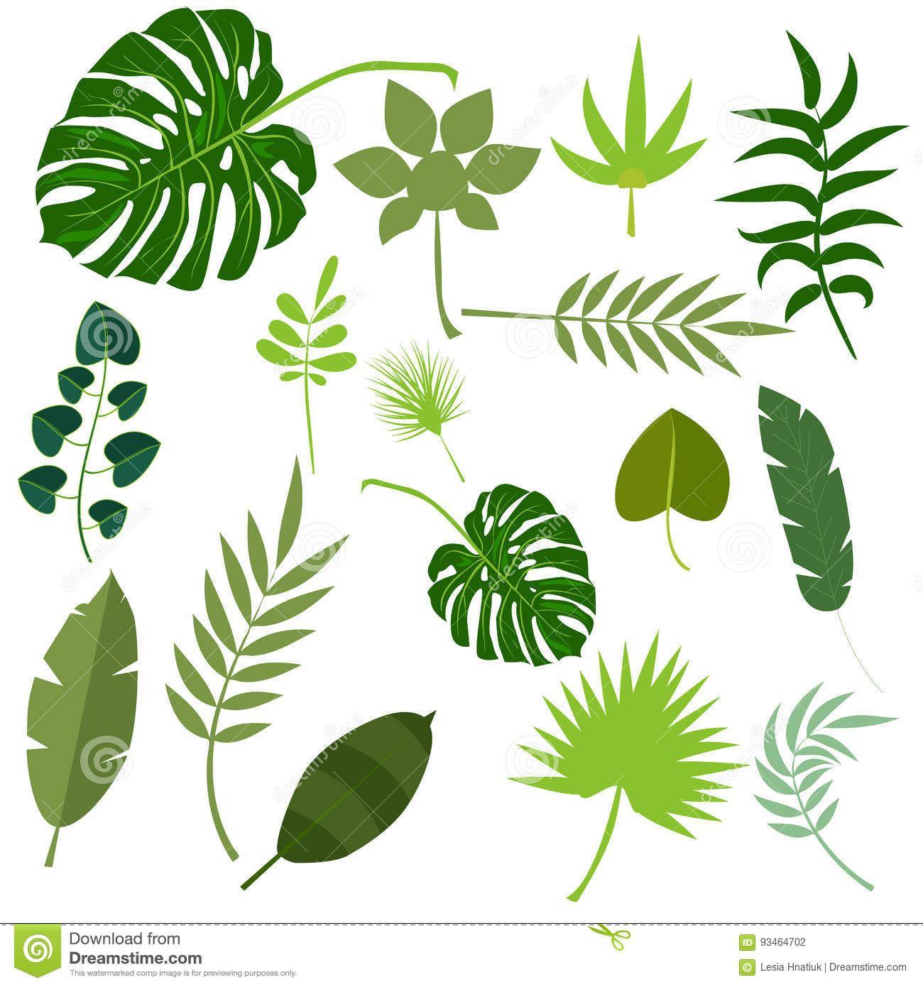 tropical leaves palm summer exotic jungle green leaf